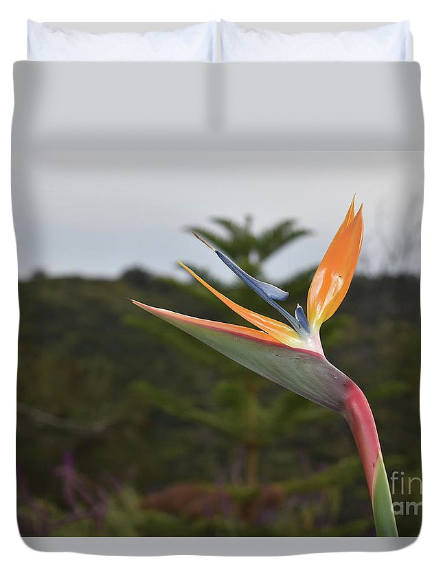Bird-of-paradise Duvet Cover featuring the photograph Beautiful Bird Of Paradise Flower In A Tropical Garden by DejaVu Designs