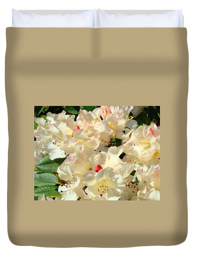 Beautiful Duvet Cover featuring the photograph Beautiful Creamy White Pink Rhodies Floral Garden Baslee Troutman by Baslee Troutman