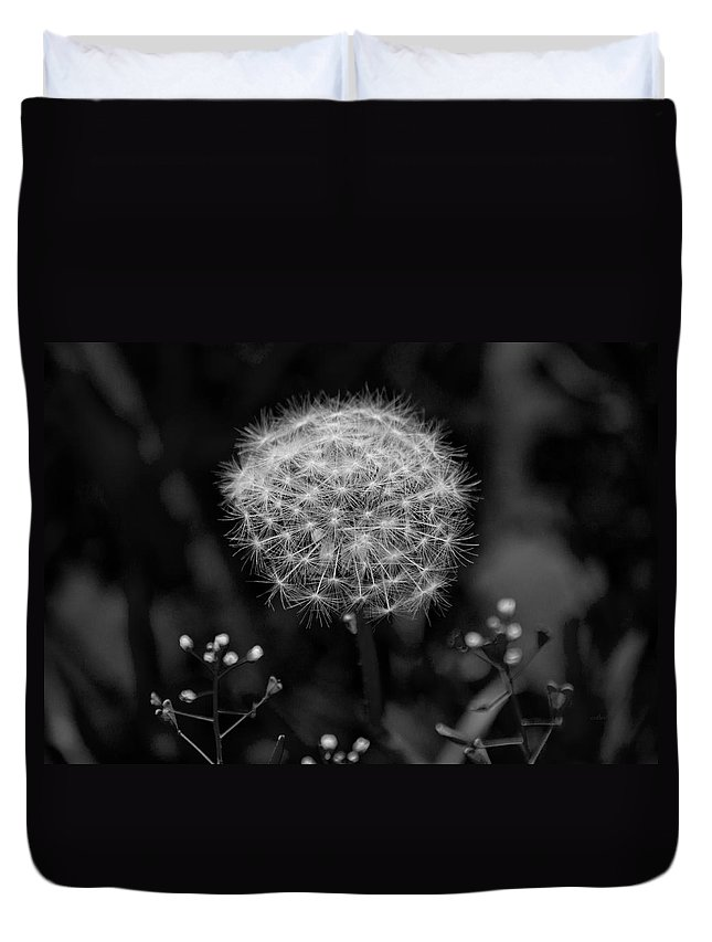 Dandelion Duvet Cover featuring the photograph Beautiful Nuisance by Betsy Knapp