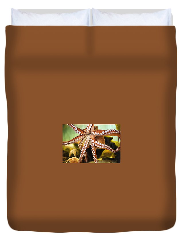 Octopus Duvet Cover featuring the photograph Beautiful Octopus by Marilyn Hunt