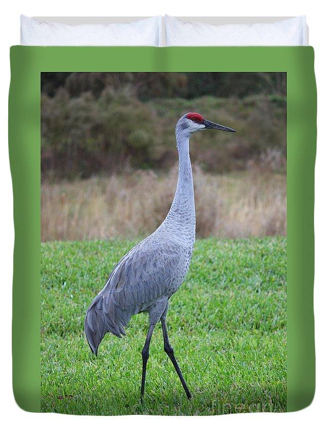 Animals Duvet Cover featuring the photograph Beautiful Sandhill Crane by Carol Groenen