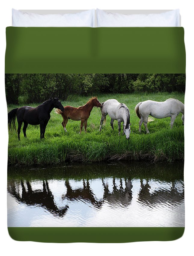 Horse Duvet Cover featuring the photograph Beauty Of Place by Bob Christopher