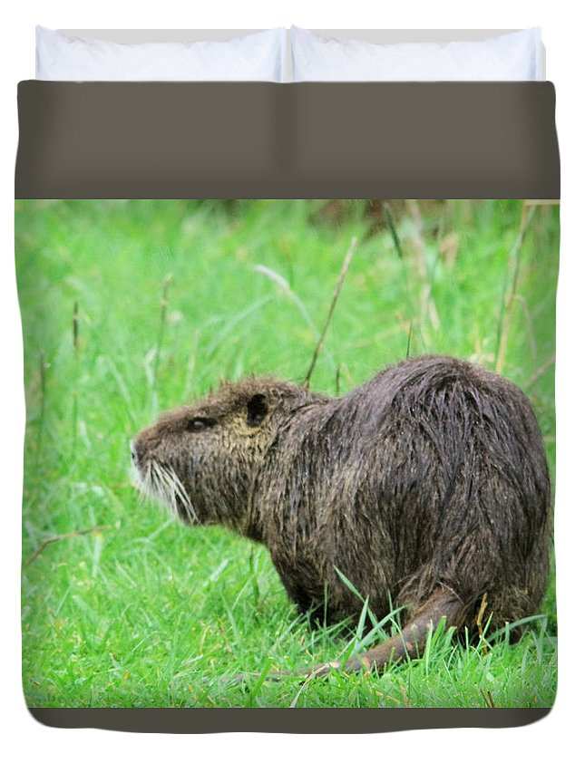 Beaver Duvet Cover featuring the photograph Beaver With Whiskers by Jeff Swan