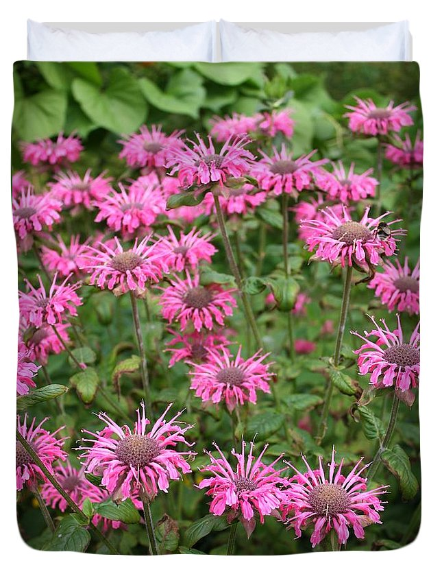 Bee Balm Duvet Cover featuring the photograph Bee Balm Beauties by Carol Groenen