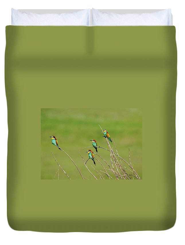 Bee Eater Duvet Cover featuring the photograph Bee Eaters In The Sun by Cliff Norton