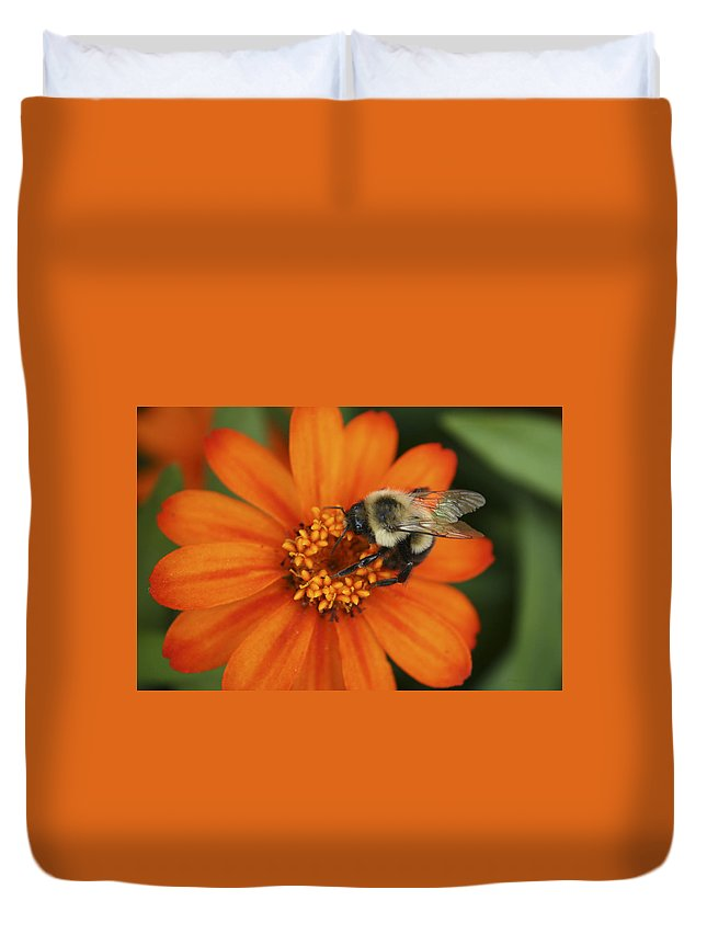 Bee Duvet Cover featuring the photograph Bee On Aster by Margie Wildblood