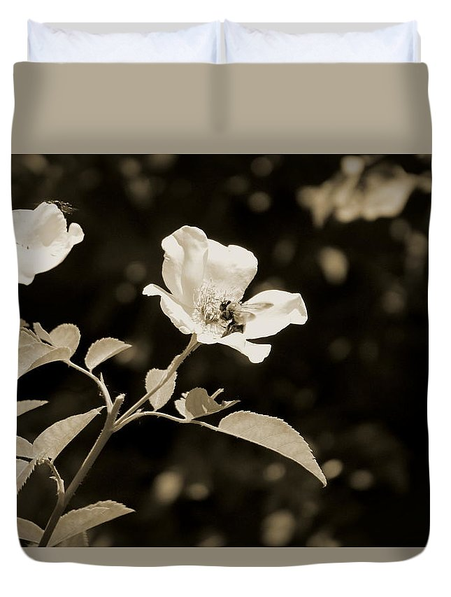Bees On Country Roses In Sepia Chicago Botanical Gardens Duvet
