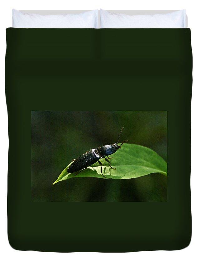 Beetle Duvet Cover featuring the photograph Beetle At Sunrise by Douglas Barnett