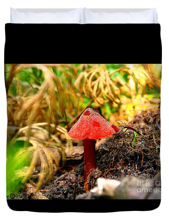 Mushroom Duvet Cover featuring the photograph Before The Trip by September Stone