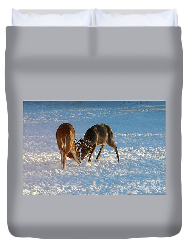 White Tailed Deer Duvet Cover featuring the photograph Being Pushy by Sandra Updyke