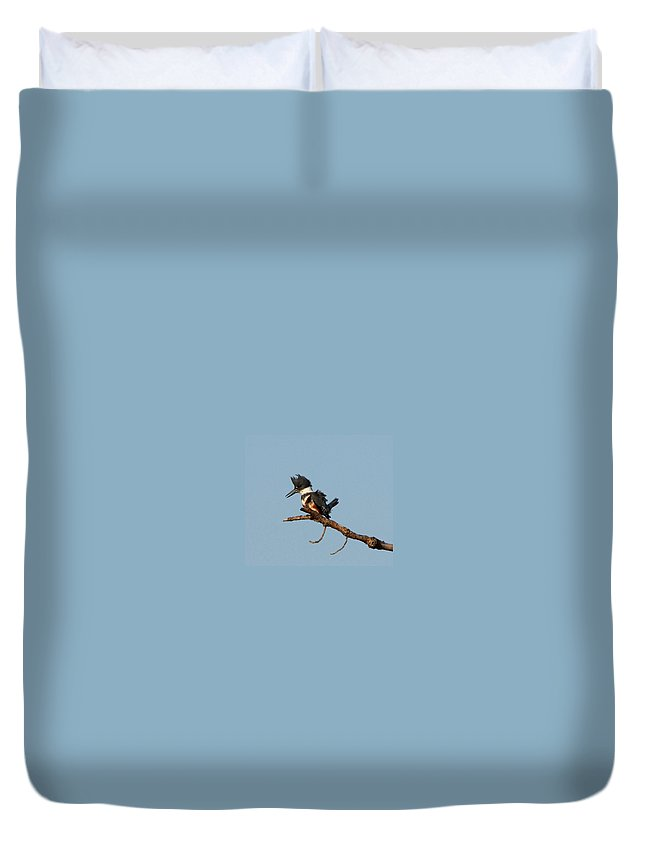 Belted Kingfisher Duvet Cover featuring the photograph Belted Kingfisher by Barbara Bowen