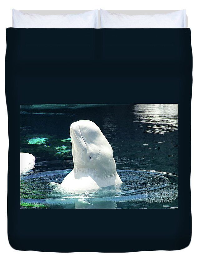 Beluga Duvet Cover featuring the photograph Beluga Whale by Mariola Bitner