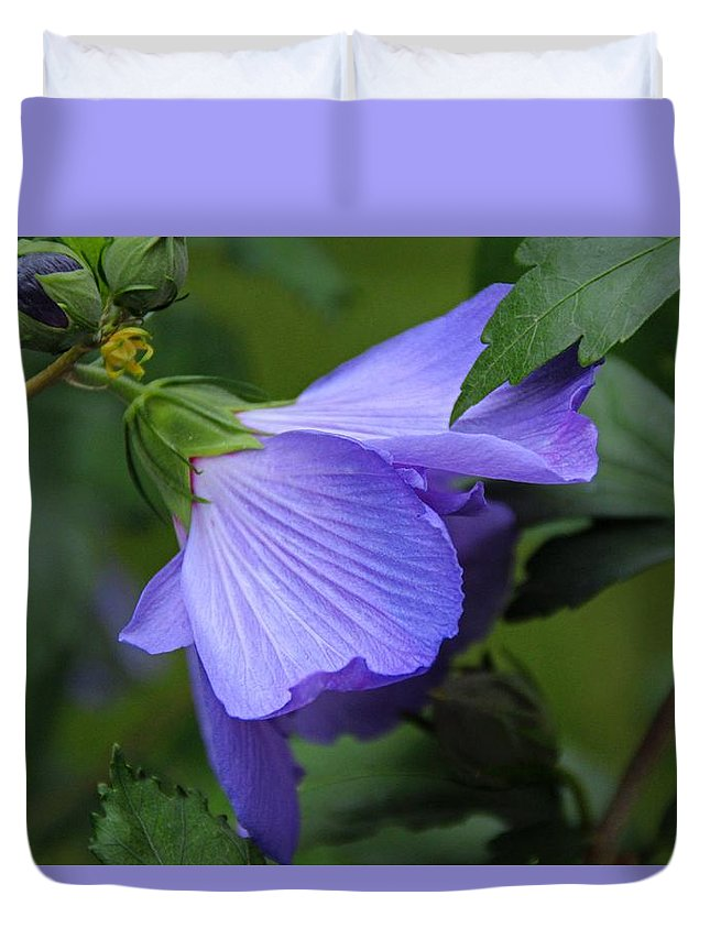Rose-of-sharon Duvet Cover featuring the photograph Beneath The Willow by Michiale Schneider