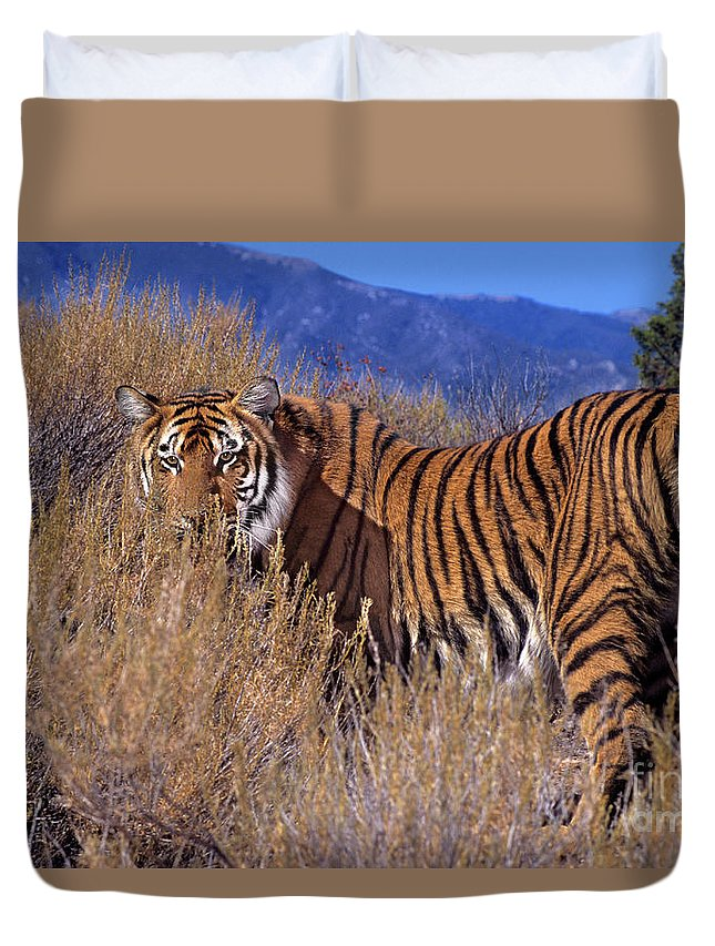 Bengal Tiger Duvet Cover featuring the photograph Bengal Tiger Endangered Species Wildlife Rescue by Dave Welling