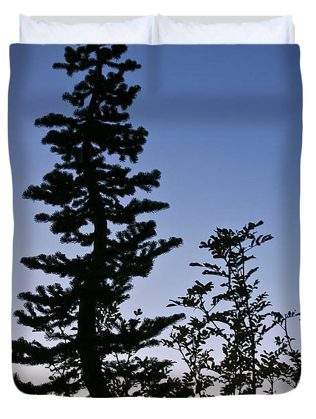 Tree Duvet Cover featuring the photograph Bent Conifer by Albert Seger