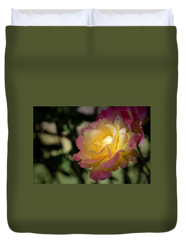 Rose Duvet Cover featuring the photograph Bettys Rose by Teresa Mucha