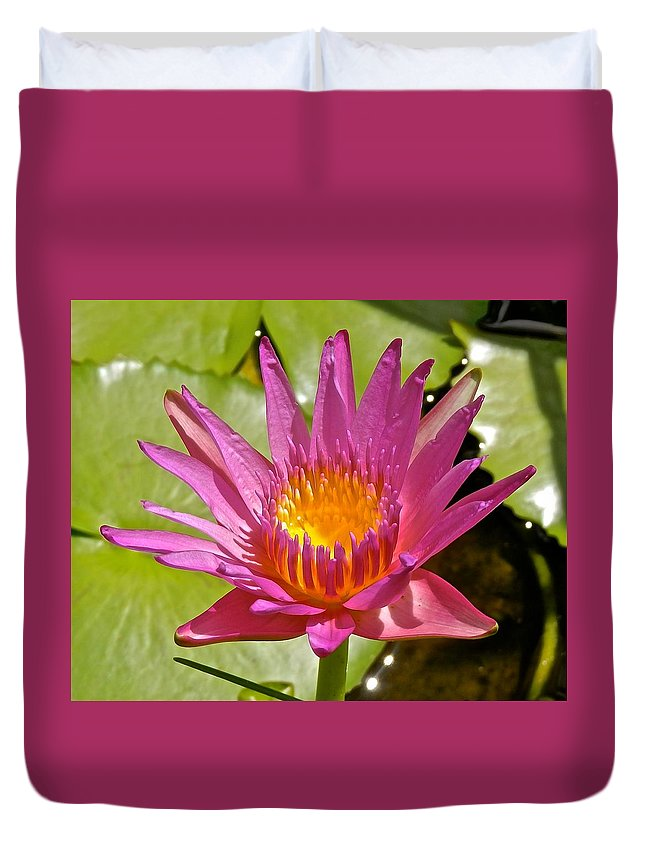 Lotus Duvet Cover featuring the photograph Beyond Beautiful Water Lily 3 by Joe Wyman