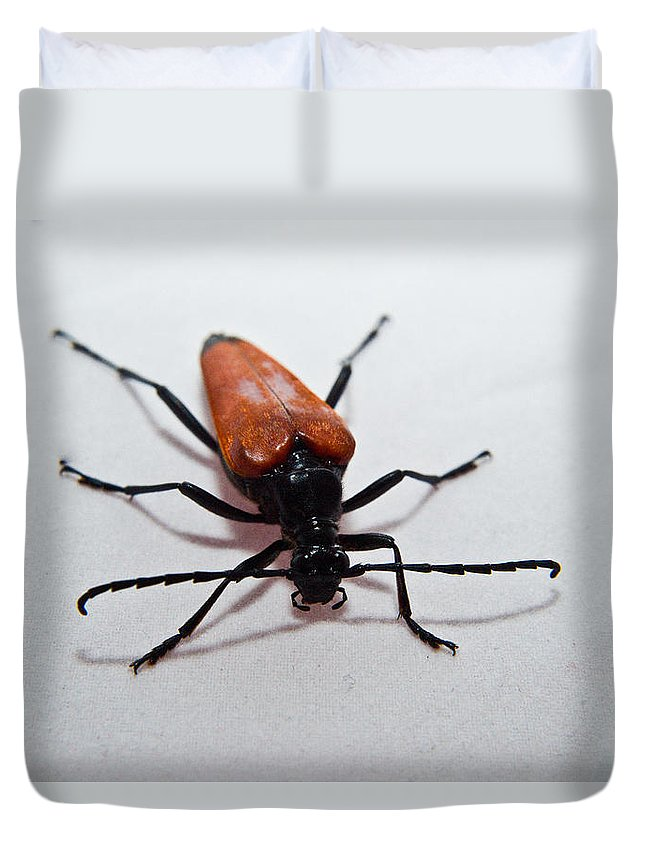 Insect Duvet Cover featuring the photograph Big Beetle by Douglas Barnett