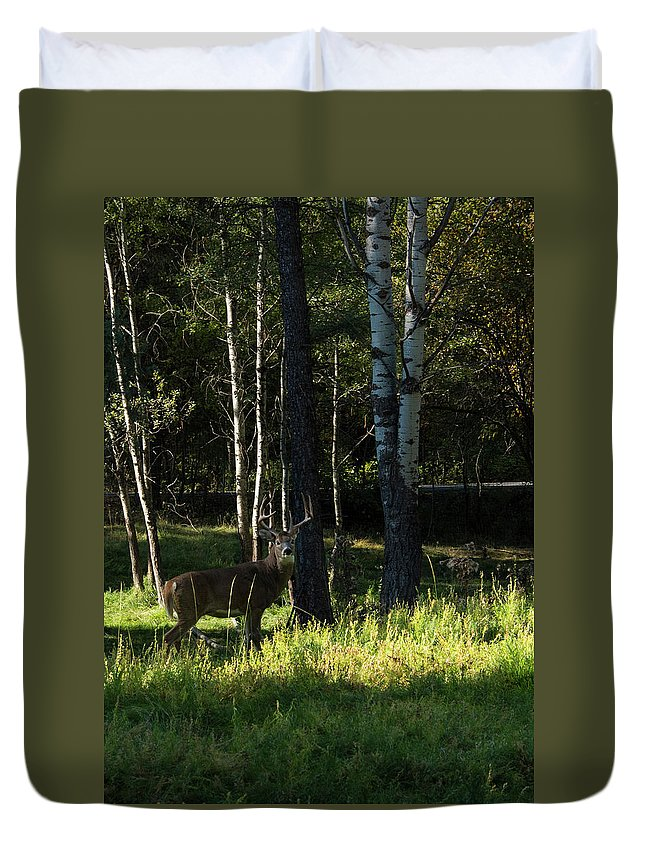 Deer Duvet Cover featuring the photograph Big Buck by Roy Nierdieck