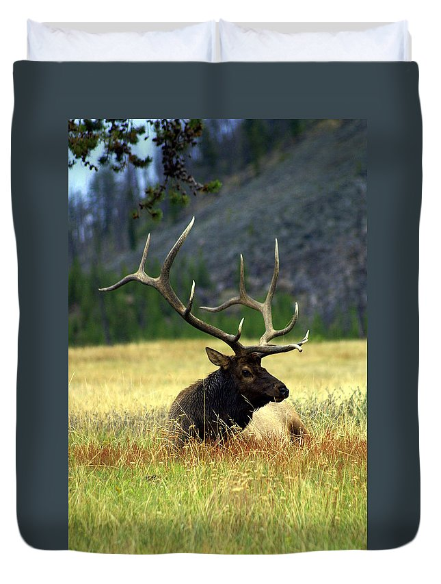 Duvet Cover featuring the photograph Big Bull 2 by Marty Koch