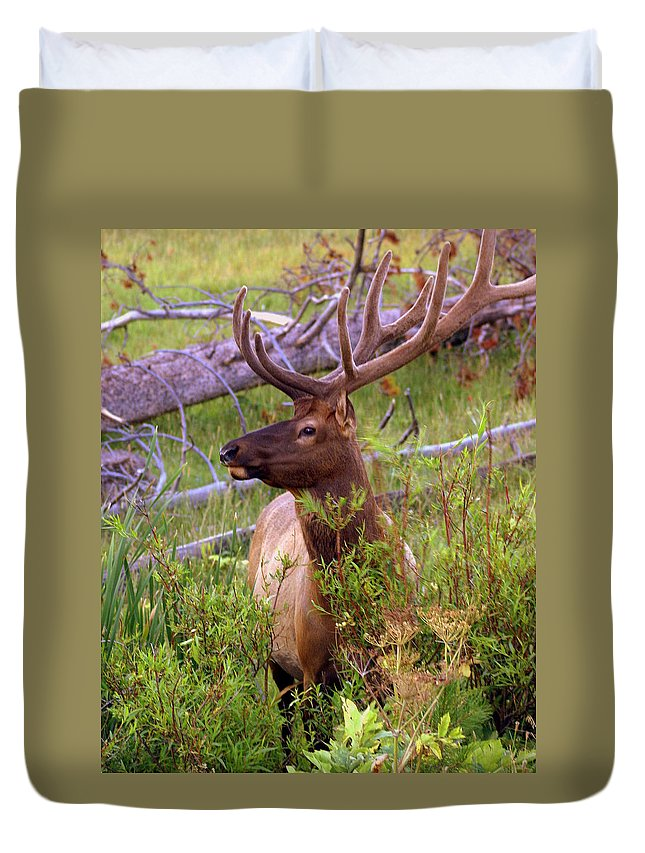 Bull Elk Duvet Cover featuring the photograph Big Bull by Marty Koch