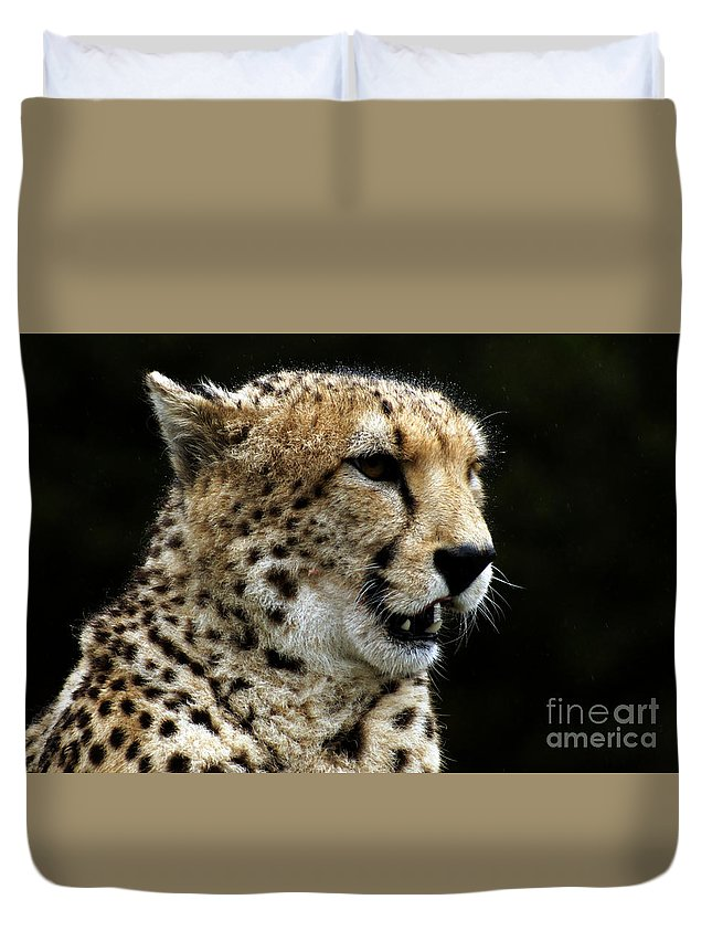 Chaeta Duvet Cover featuring the photograph Big Cats 101 by Ben Yassa