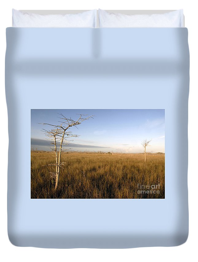 Bald Cypress Duvet Cover featuring the photograph Big Cypress by David Lee Thompson