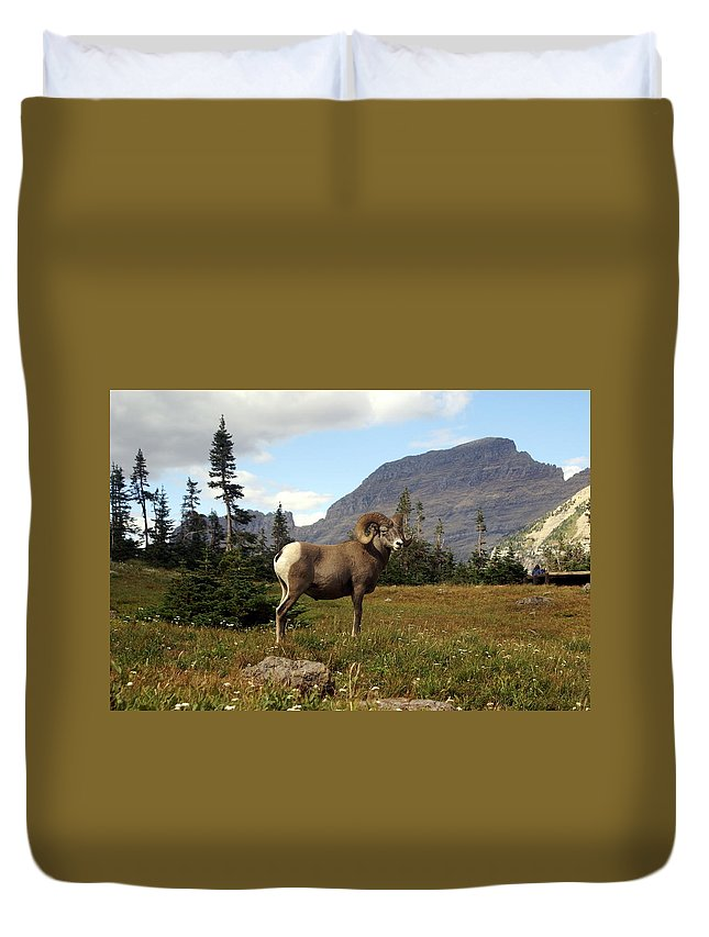 Big Horn Ram Duvet Cover featuring the photograph Big Horn 4  by Marty Koch