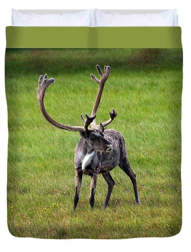 Caribou Duvet Cover featuring the photograph Big Horn by Anthony Jones