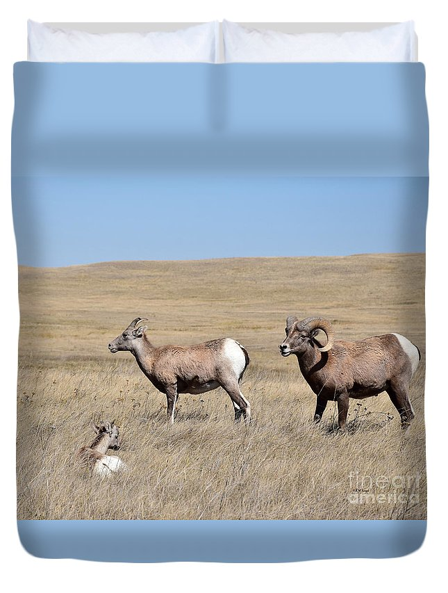 Big Horn Sheep Family Duvet Cover featuring the photograph Big Horn Sheep Family by Kathy M Krause