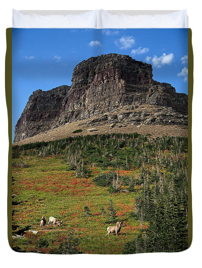 Lawrence Duvet Cover featuring the photograph Big Horn Sheep by Lawrence Boothby