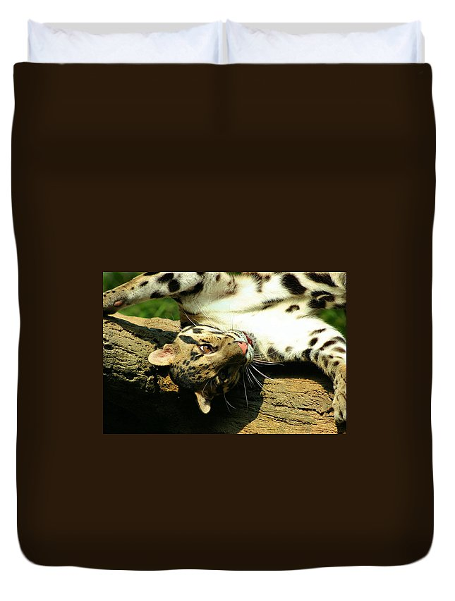 Clouded Leopard Duvet Cover featuring the photograph Big Kitty Fun by Kristin Elmquist