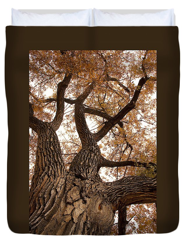 Giant Duvet Cover featuring the photograph Big Tree by James BO Insogna