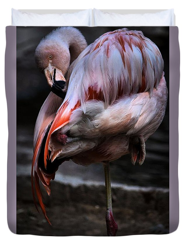 Flamingo Duvet Cover featuring the photograph Biggggggg Primpin by Robert McCubbin