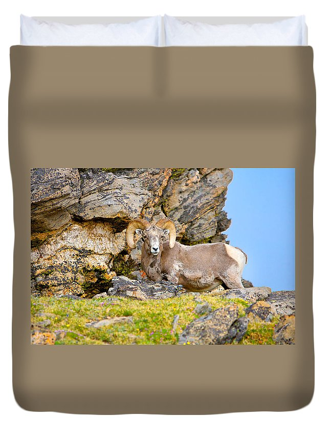 Ram Duvet Cover featuring the photograph Bighorn Sheep by James O Thompson