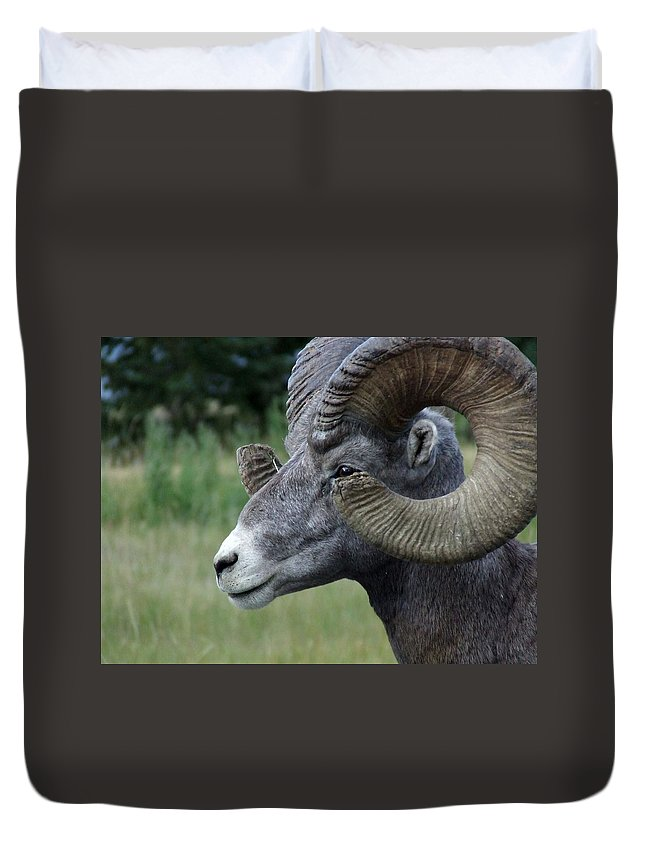 Big Horned Ram Duvet Cover featuring the photograph Bighorned Ram by Tiffany Vest