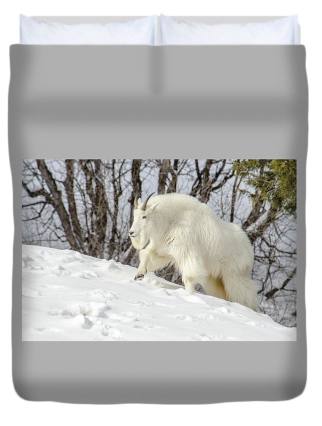 Rocky Mountain Goat Duvet Cover featuring the photograph Billy Goat On The Move by Yeates Photography