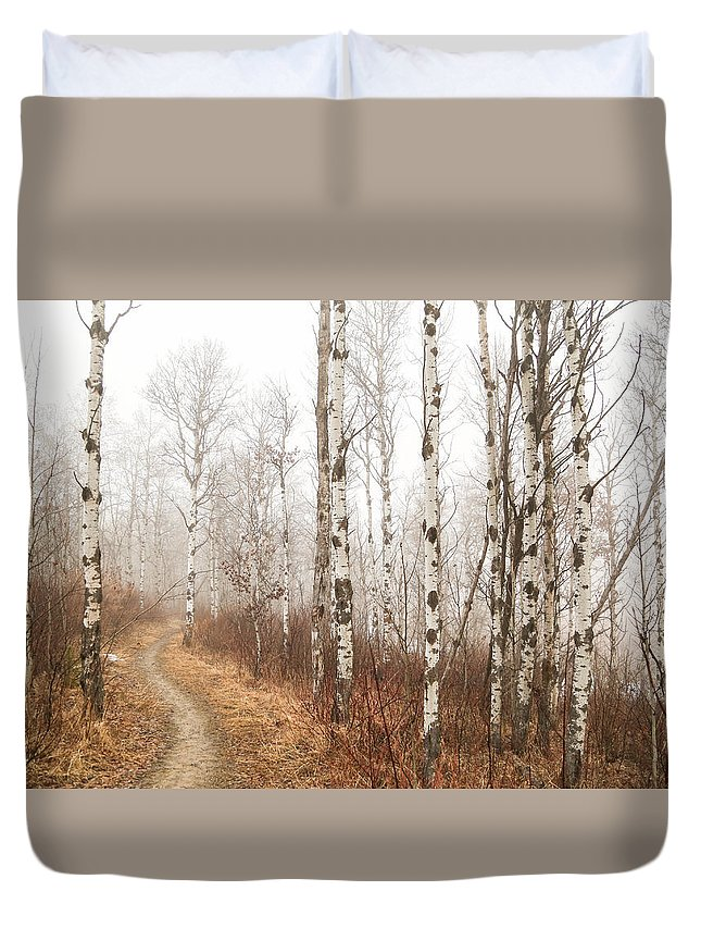 Birch Trees Duvet Cover featuring the photograph Birch Walk by Kendra Keir