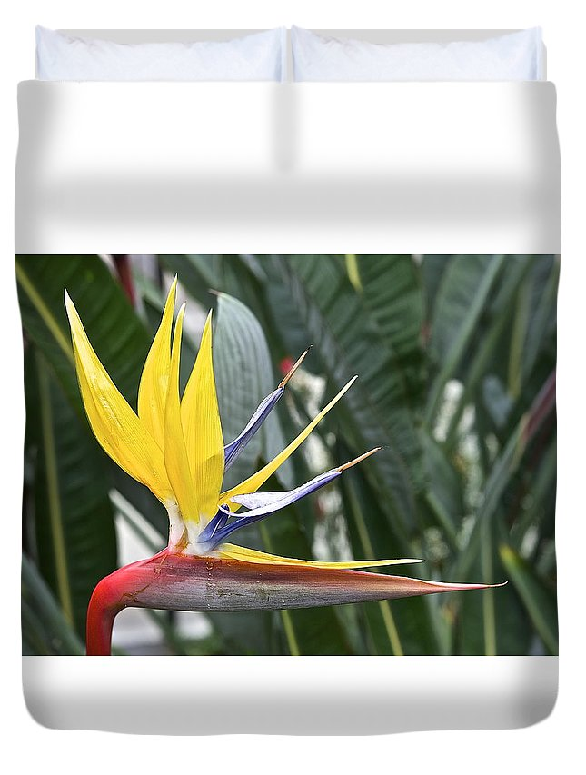 Bird Of Paradise Longwood Gardens Duvet Cover featuring the photograph Bird Of Paradise Longwood Gardens by Mark Holden