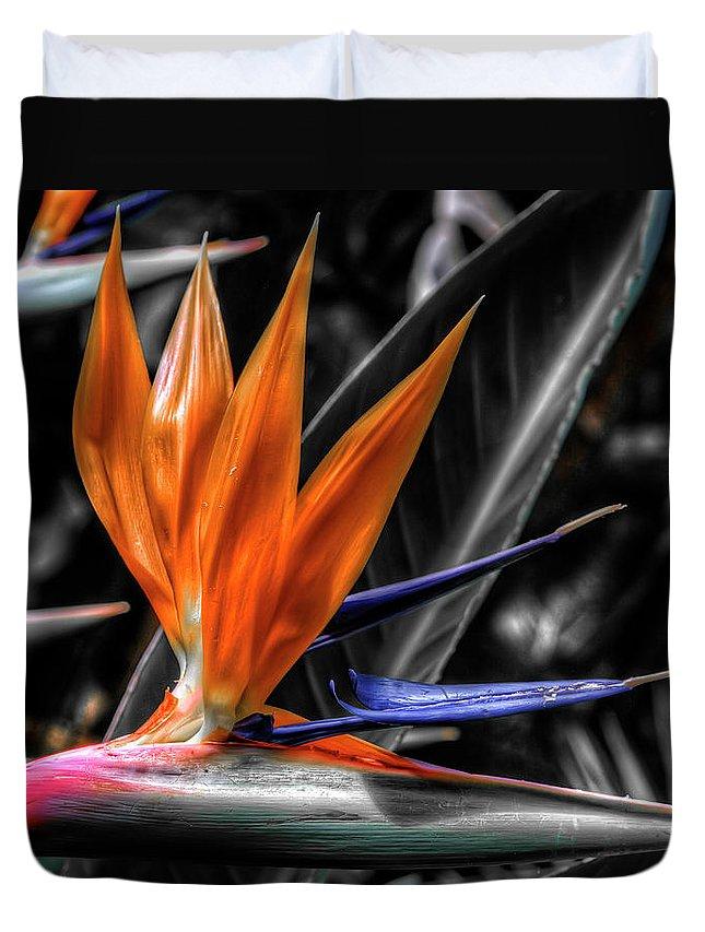Strelitzia Duvet Cover featuring the photograph Bird Of Paradise by Wayne Sherriff