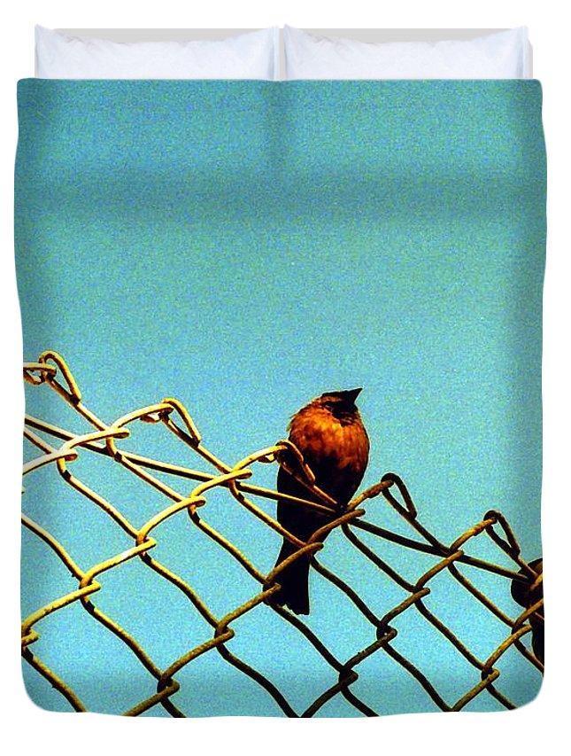 Bird Photo Duvet Cover featuring the photograph Bird On Fence by Karin Kohlmeier