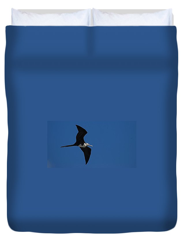 Bird Duvet Cover featuring the photograph Bird by Galeria Trompiz