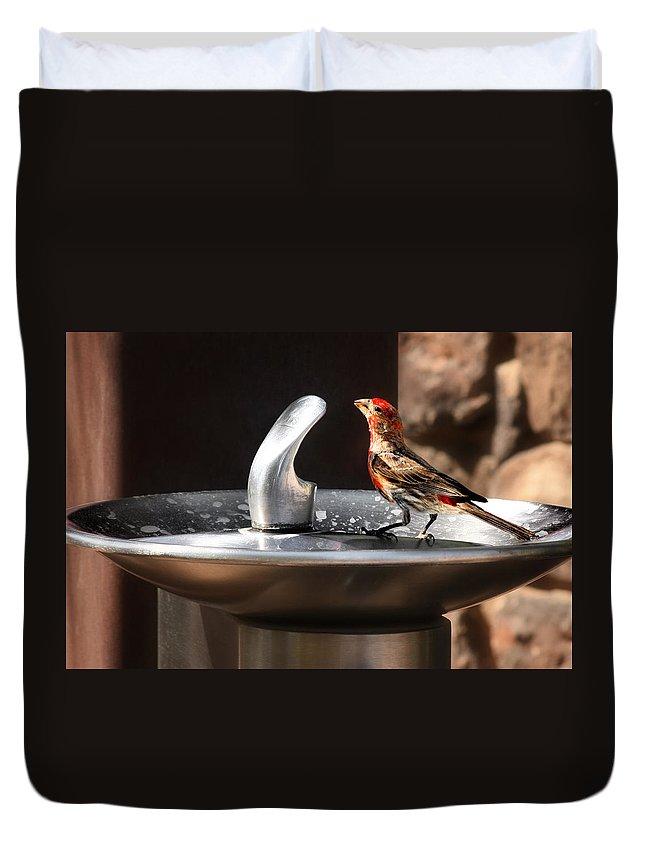 Avian Duvet Cover featuring the photograph Bird Spa by Alexandra Till