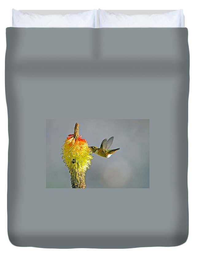 Hummingbird Duvet Cover featuring the photograph Birds And Bees by Mike Dawson