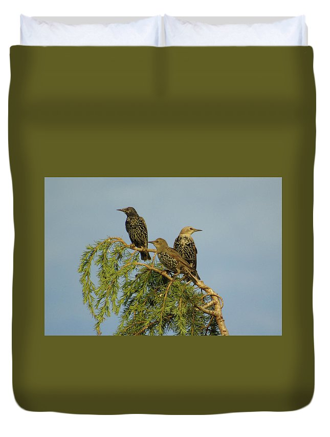 Three Duvet Cover featuring the photograph Birds-on-watch by Gordon Auld