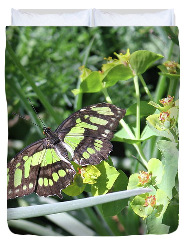Butterfly Duvet Cover featuring the photograph Black And Green Butterfly by Kelly Holm