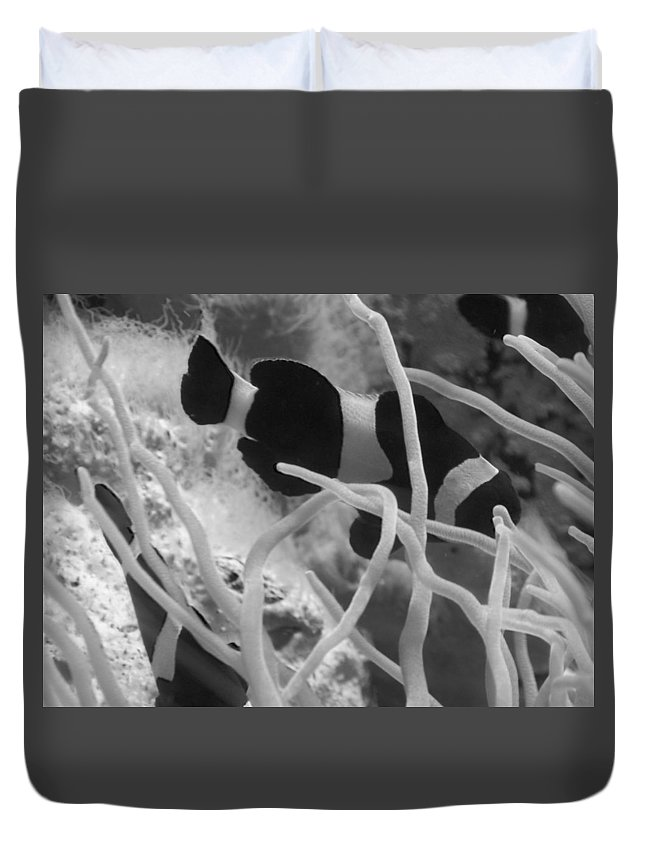 Clownfish Duvet Cover featuring the photograph Black And White Clownfish by Bethany Morrow