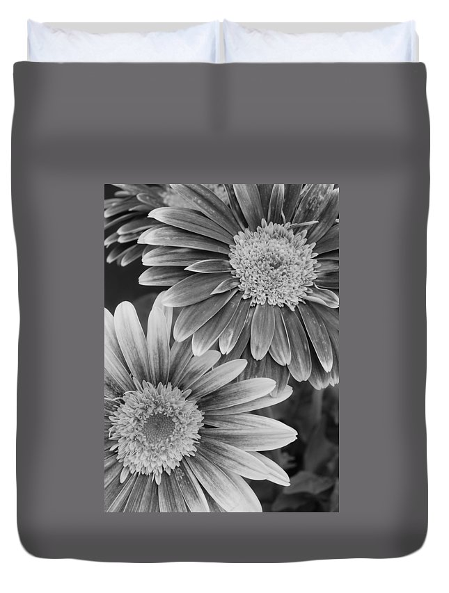 Flower Duvet Cover featuring the photograph Black And White Gerber Daisies 2 by Amy Fose