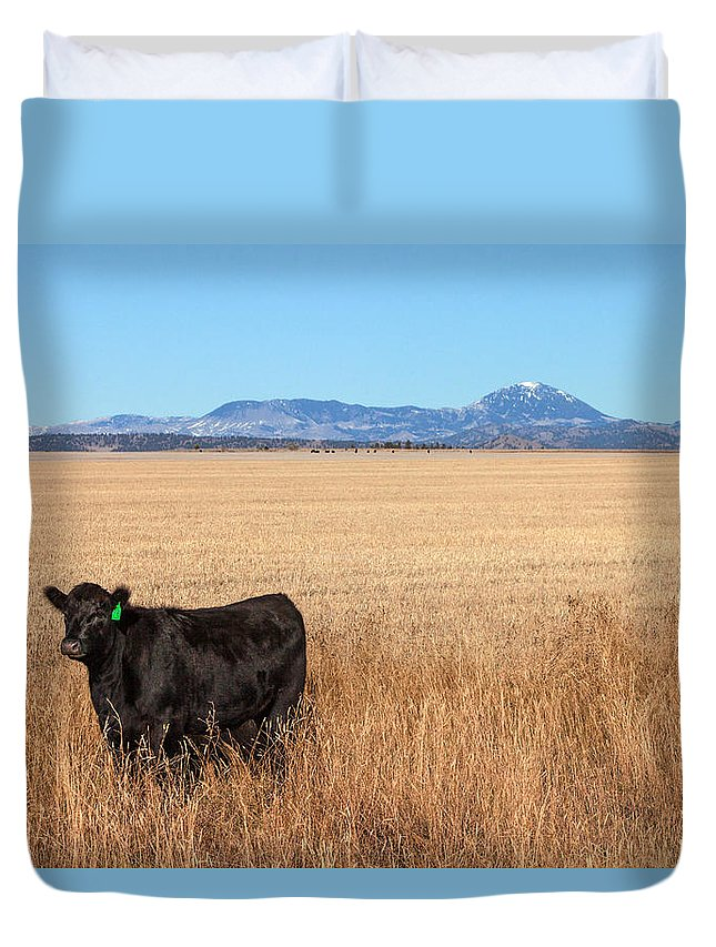 Black Angus Duvet Cover featuring the photograph Black Angus Looking by Todd Klassy