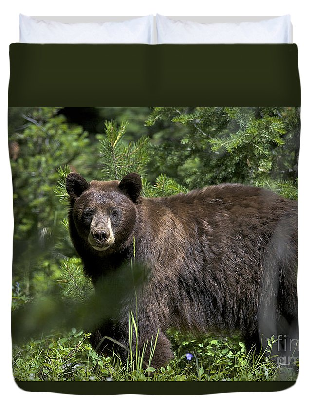Black Bear Duvet Cover featuring the photograph Black Bear In Grand Teton National Park by Daryl L Hunter